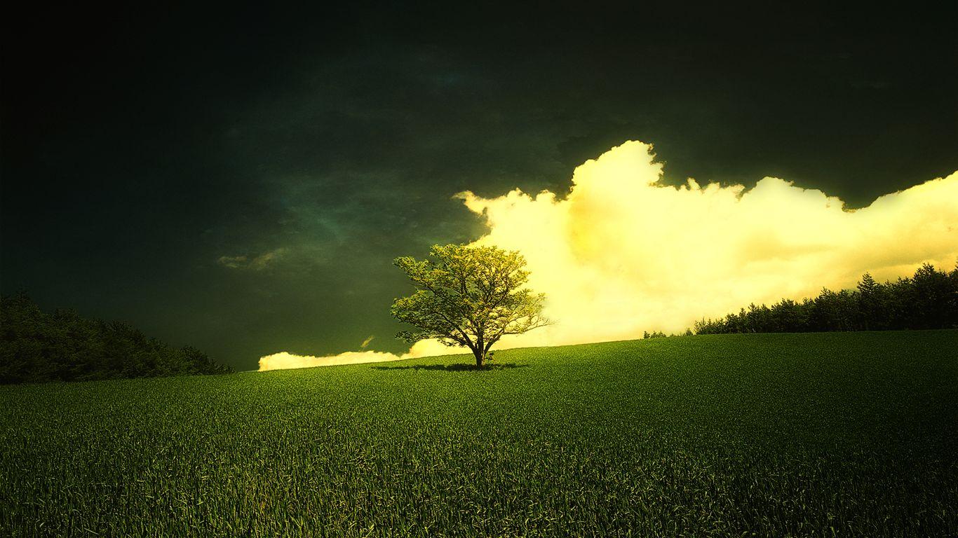 baser nature