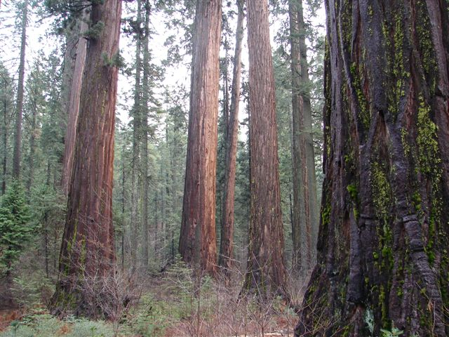 [Big+Trees+066.jpg]