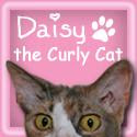 Daisy The Curly Cat