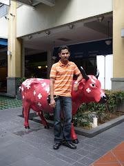 Sweden's cow