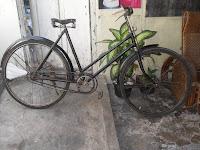 Sepeda kebo The Mister