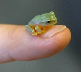 FROGGY THUMBNAIL