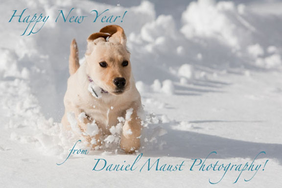 happy new year puppy wallpaper new year wallpaper