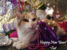 FASHION SHOW: New Year Cat Wallpapers