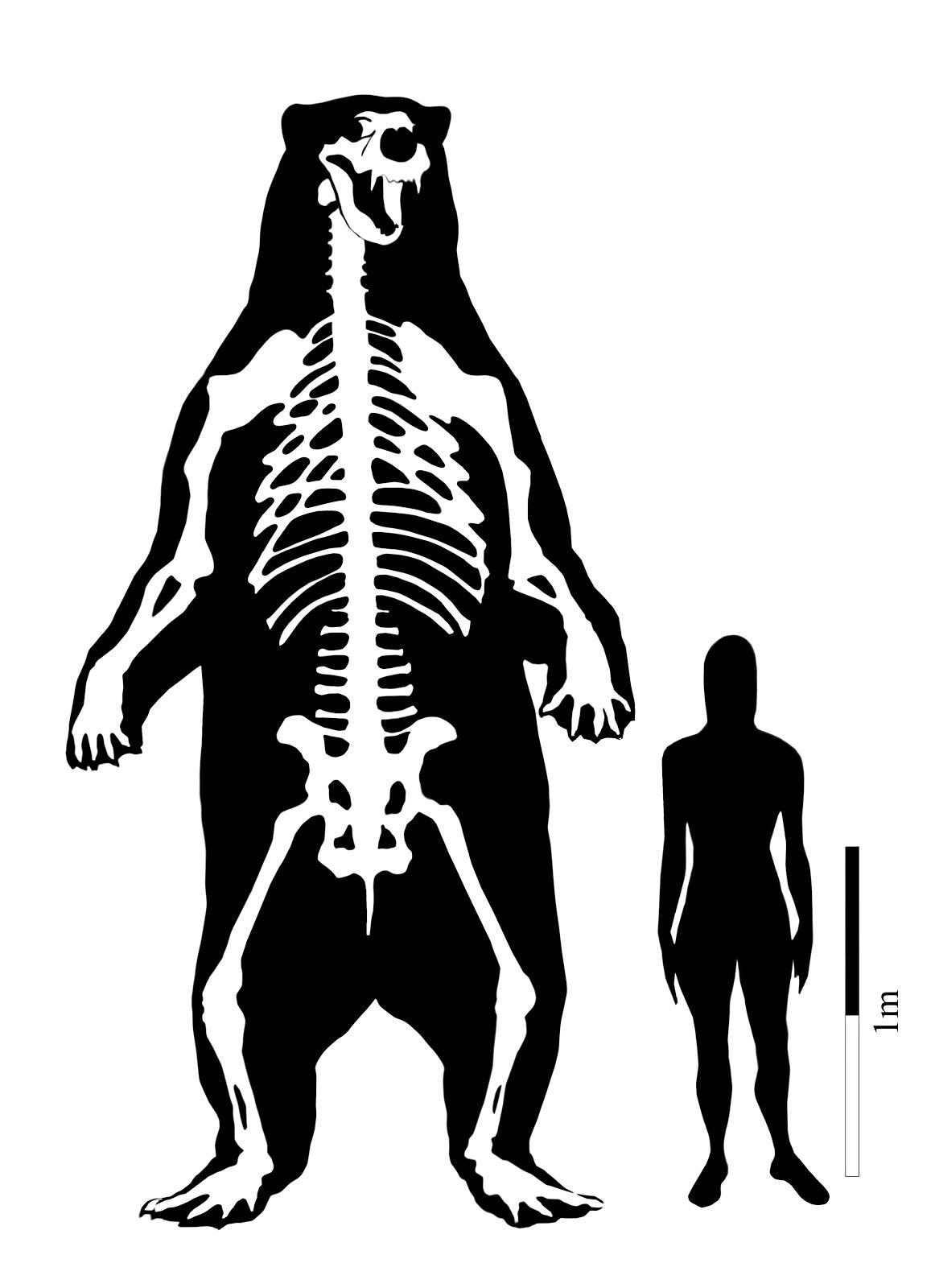 Asociación Paleontológica Argentina: enero 2011