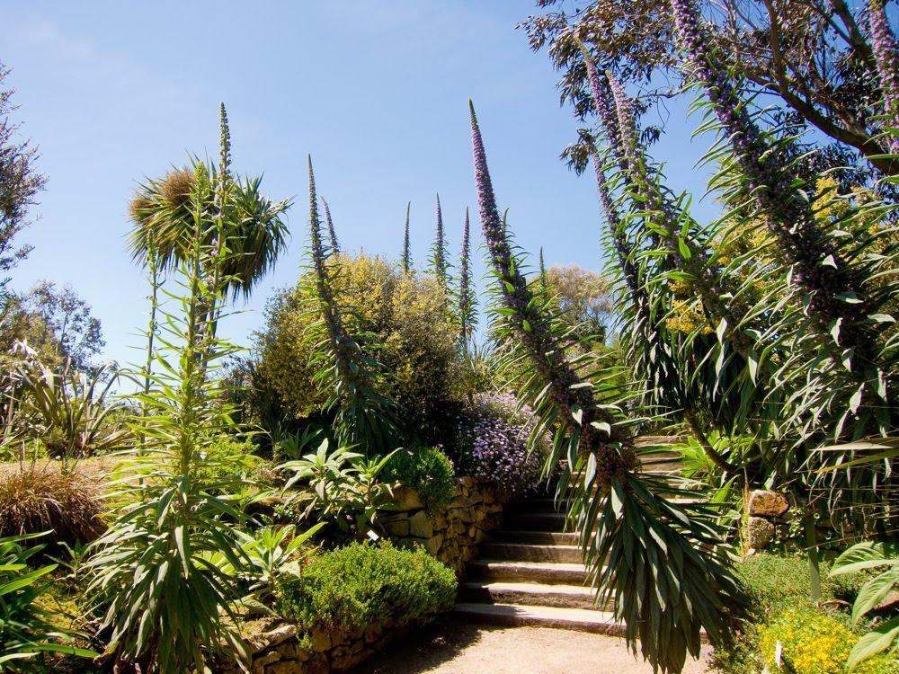 Le blog de sept lieues le jardin exotique de roscoff - Le jardin exotique de roscoff ...