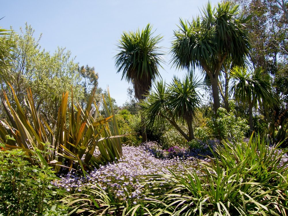 Le blog de sept lieues le jardin exotique de roscoff - Jardin exotique de roscoff paris ...