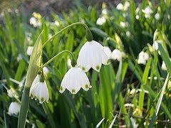 Birmingham Botanical Gardens Flowers