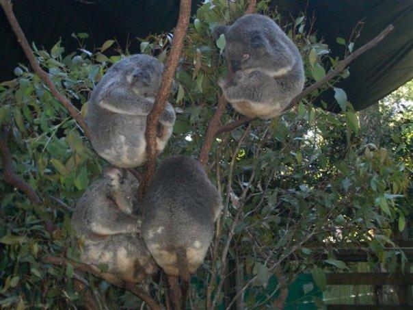 [koalabutts]