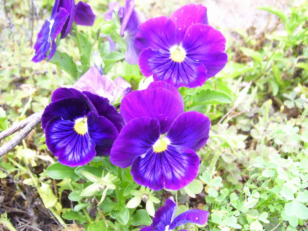 Common Purple Garden Flowers common purple garden flowers - home design ideas