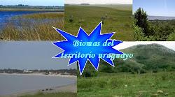 Conociendo más acerca de los Biomas del Uruguay