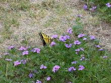 Mac's Butterfly