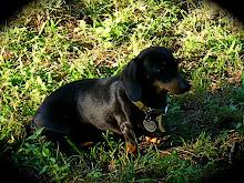 Mac's dog Coco