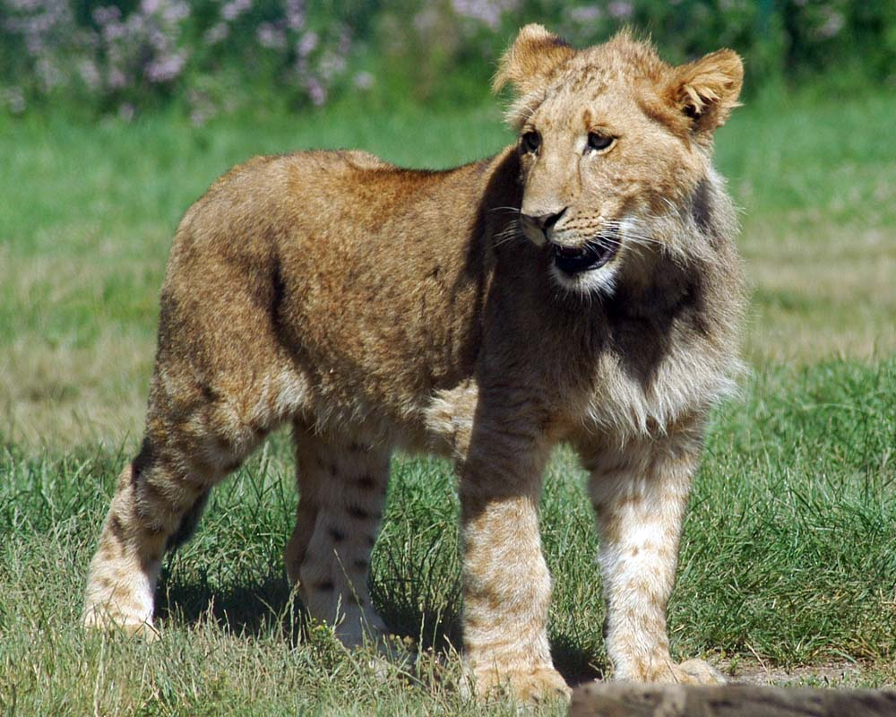 African lion safari toronto discount coupons