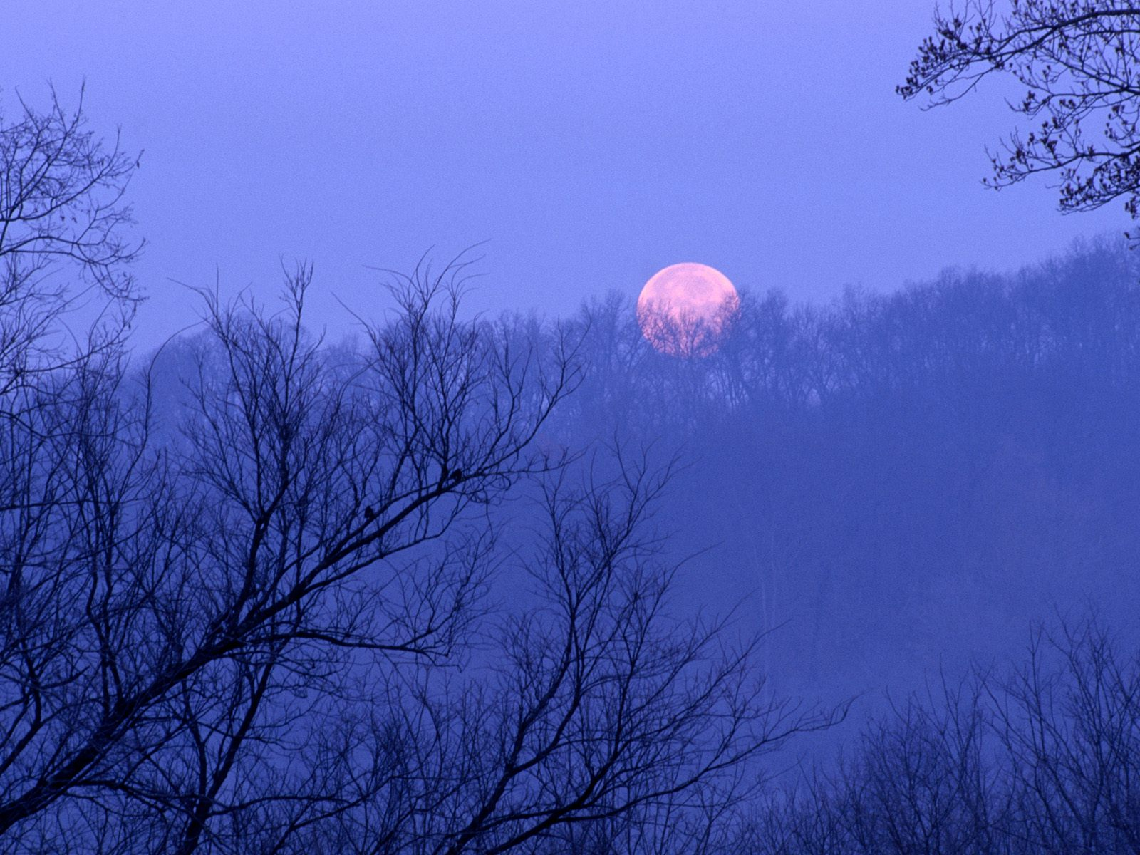 http://1.bp.blogspot.com/_8_CLn-I1Tfc/TUWyBCn6Q1I/AAAAAAAABt4/8dYiVHppGBQ/s1600/Full+Moon+Setting%252C+Percy+Warner+State+Park%252C+Tennessee.jpg