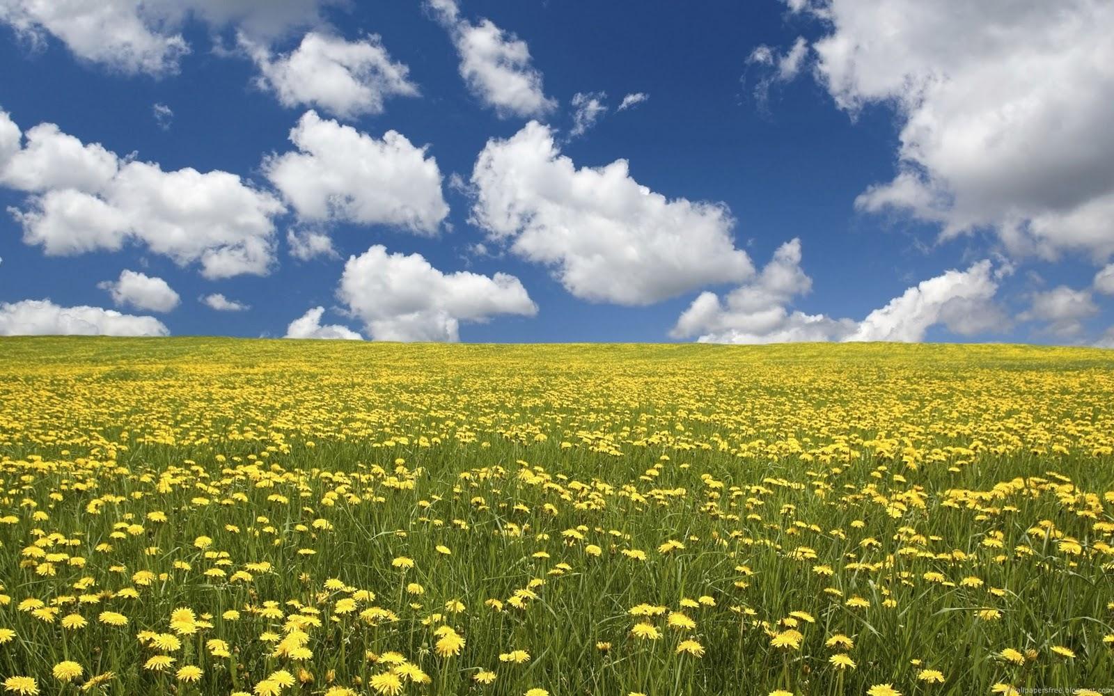 Summer Flower Field Wallpaper hallo: Outdoor Landsca...