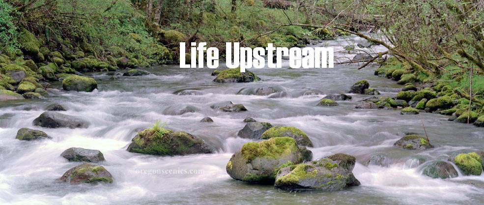 Life Upstream