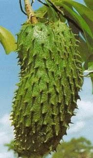 DurianBelanda