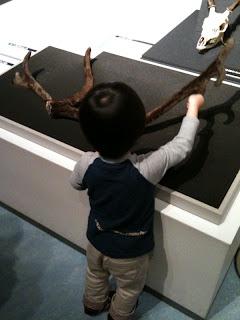 国立科学博物館の大哺乳類展でトナカイの角を触る息子