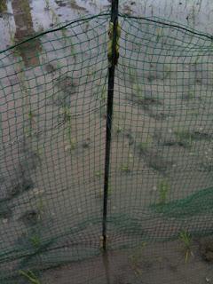 四方をネットで囲んだ。