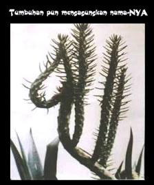 cactus_52778_f_75892.jpg