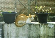 Kucing dan Pot | Lokasi: Pagar Rumah, Ponorogo