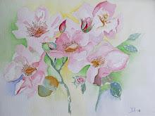 Wilde rozen (te koop)