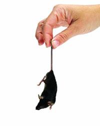 Jasa pelayanan pemberantasan hama tikus (rodent control) adalah suatu