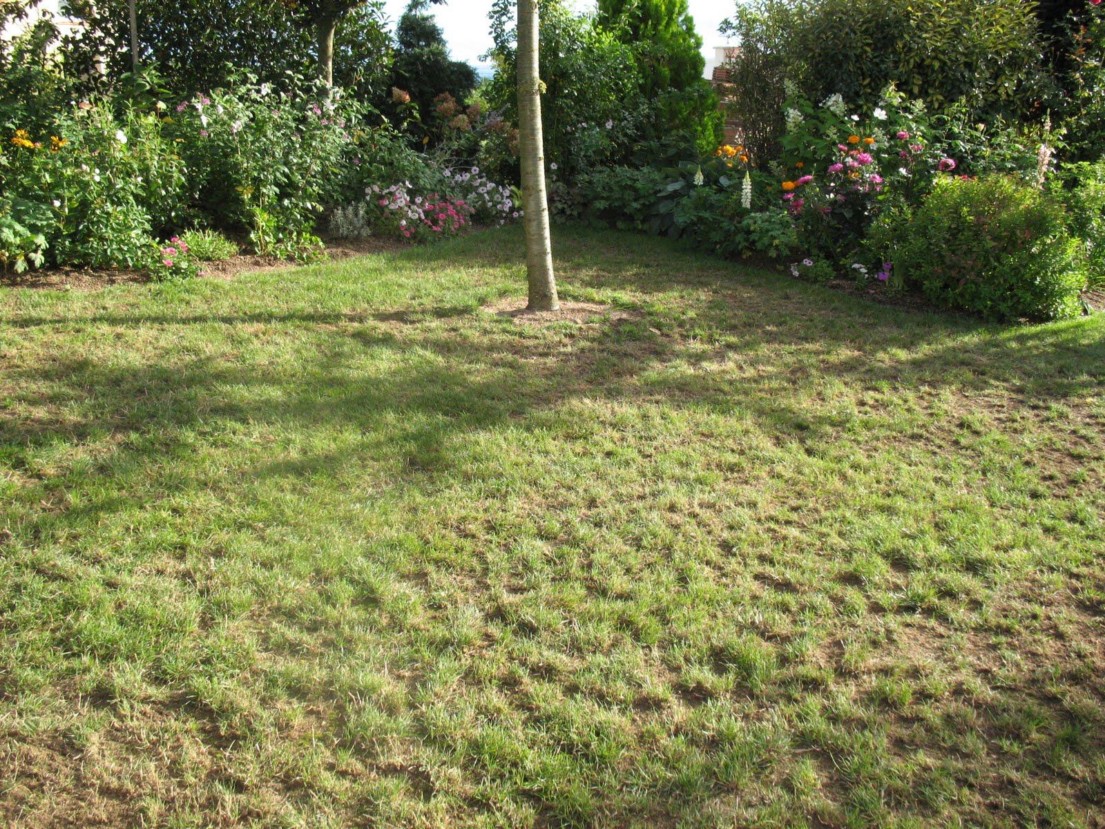 Roses du jardin ch neland cr ation de la pelouse for Azote pour jardin