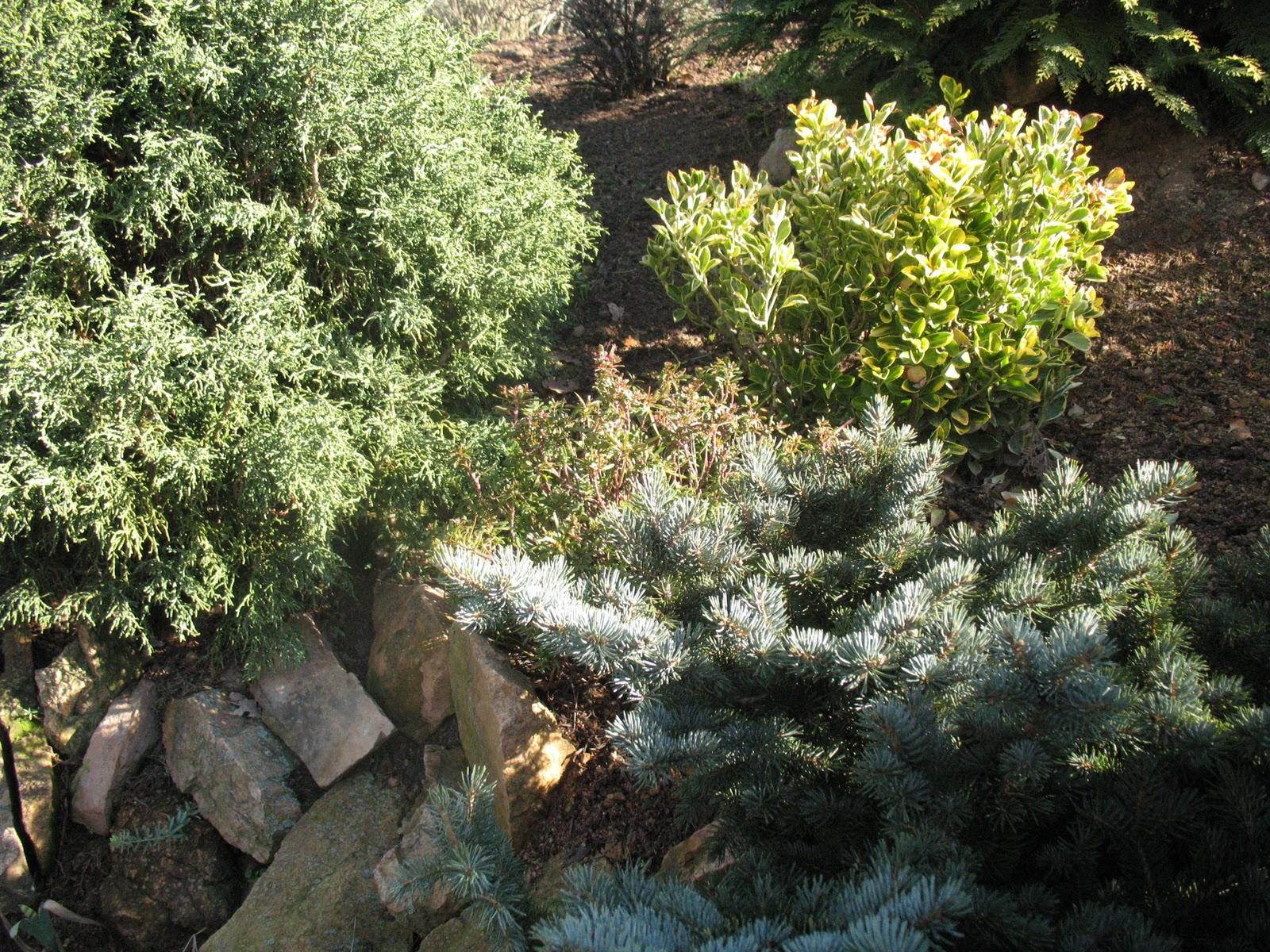 Roses du jardin ch neland sous le soleil d 39 hiver for Entretien du jardin en hiver