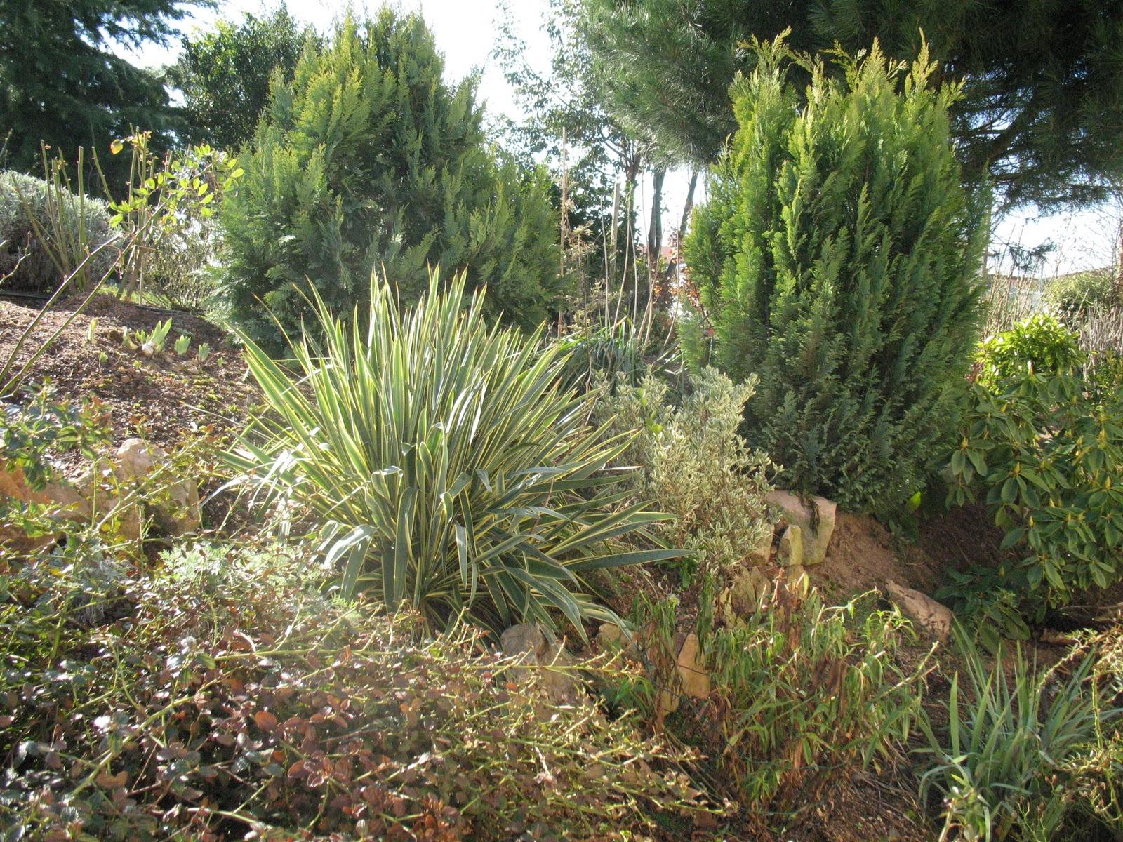 Roses du jardin ch neland sous le soleil d 39 hiver - Arbuste decoratif persistant ...
