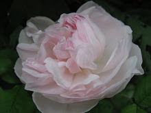 &#39;Alfred de Dalmas&#39;