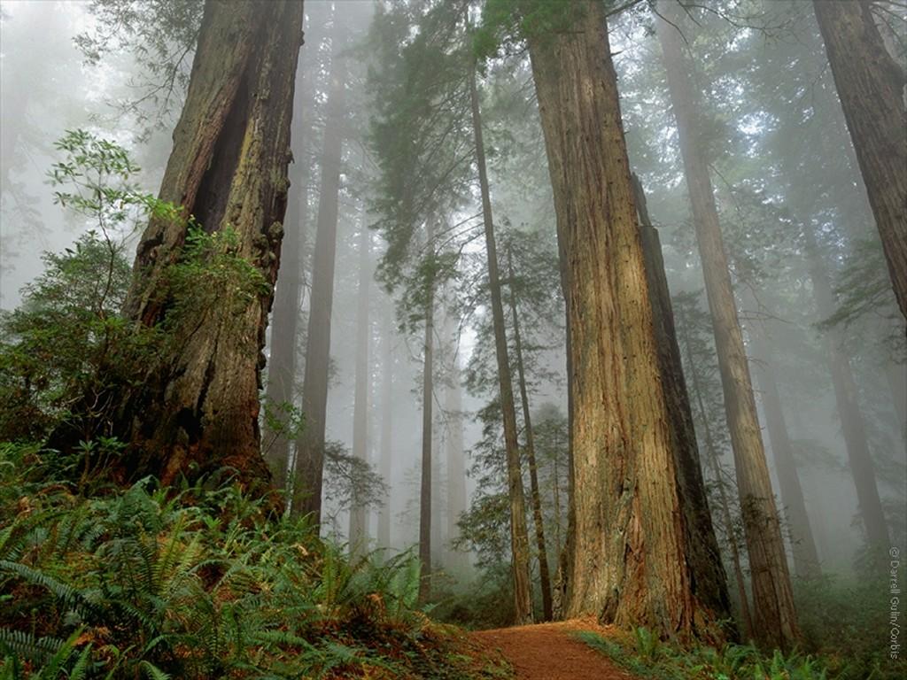 http://1.bp.blogspot.com/_8i3iOz_AgoQ/TPW5KNc5qkI/AAAAAAAAAEk/BFBfVZ7BTGg/s1600/fog-forest-wallpaper.jpg