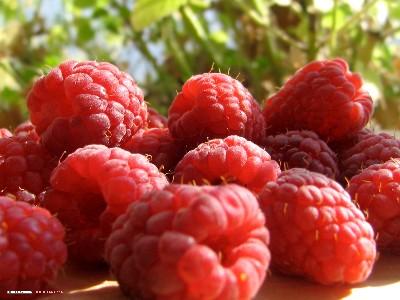 van kleine vruchten