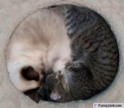 Circle cats.