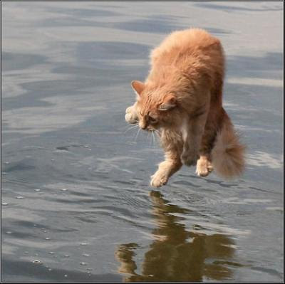 Cat walks along the water.