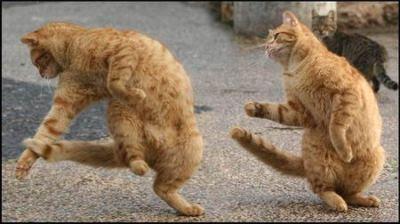 Funny dancing cats.