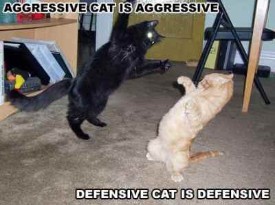 Aggressive defensive pats.