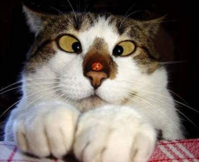 The squint-eyed tomcat.