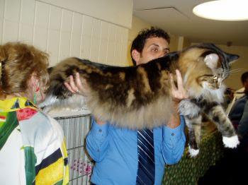 The big funny cat.
