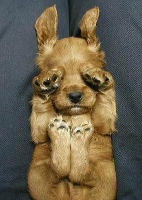 The amusing puppy.