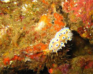 coral in Talu Island and Sinh-Sung Island