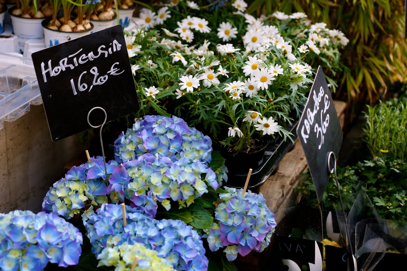 Flowers for sale in Brussels, Belgium