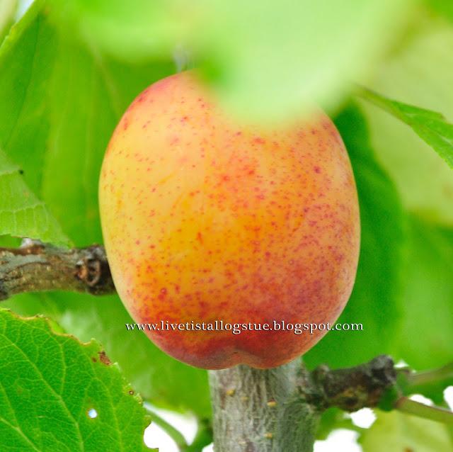 hvordan sjekke fruktbarhet