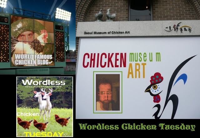 Wordless Chicken Tuesday Club
