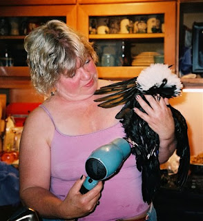 Chicken Sheila Hair drier