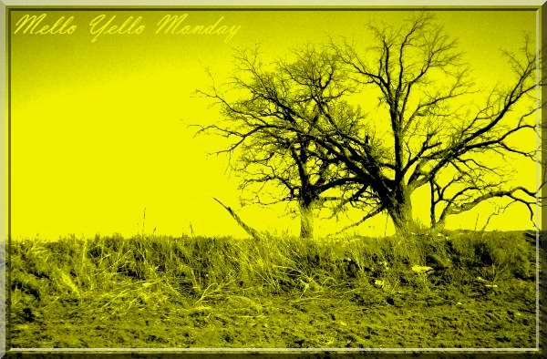 mellow yellow branches