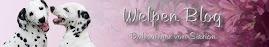 Welpen 2010/2011