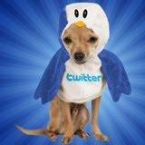 Siga a gente no Twitter!