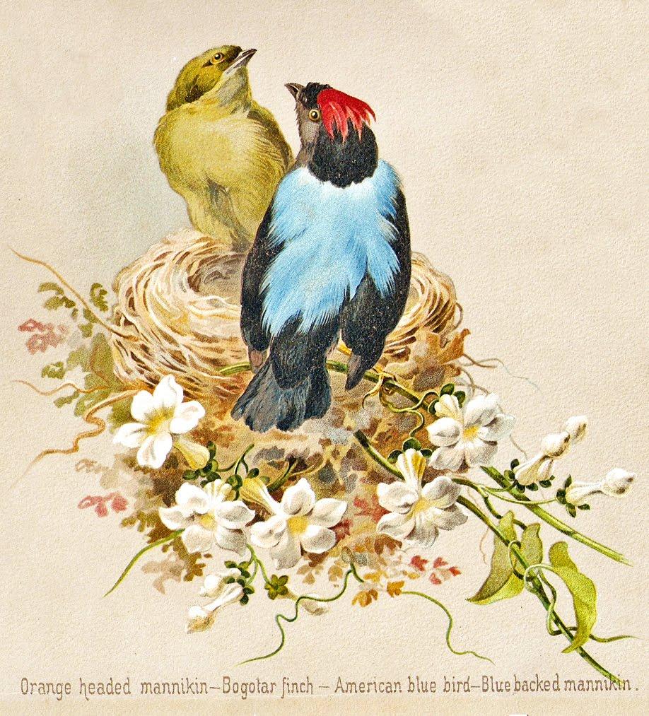 Открытки с цветами и птицами в